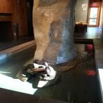 Schildkröte im Spa Sacacomie