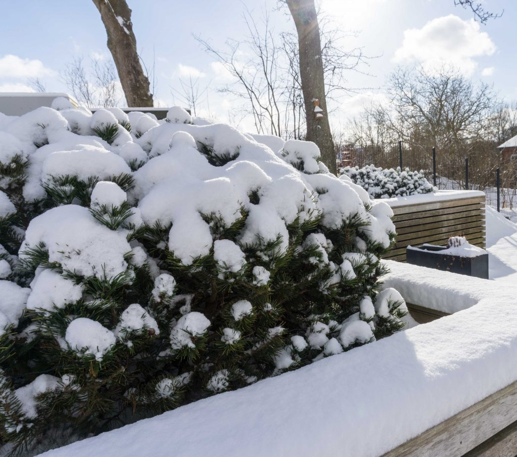 Unser Garten im Winter | schneebedeckt, pflegeleicht, modern | Blogbeitrag zum winterlichen, modernen Garten mit Gräsern, Rotbuchenhecke und Kiefern | familiethimm.de